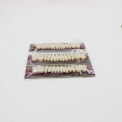 上齿合金钉瓷牙A2 (单口装) 22#